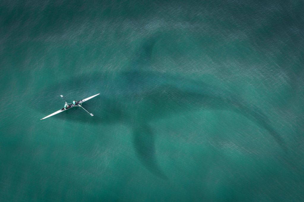 Humans float in a boat on the ocean's surface while a whale swims underneath them.